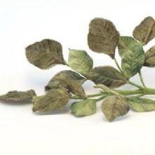 Vintage Shaded Green Velvet Rose Leaves